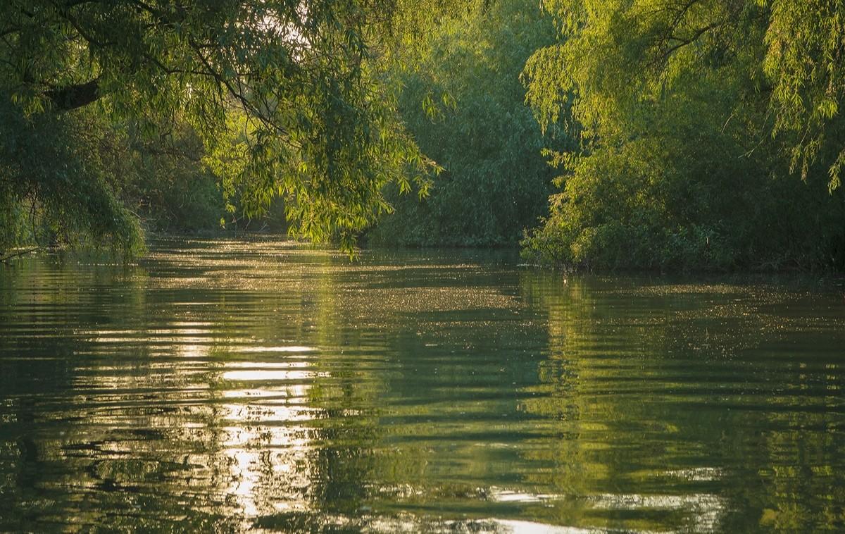 Danube Delta42
